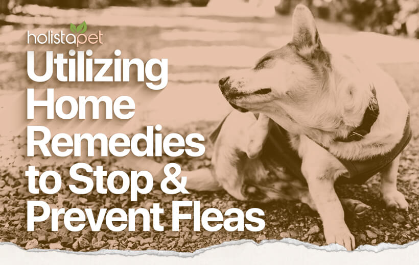 home remedies for fleas on dogs blog featured image