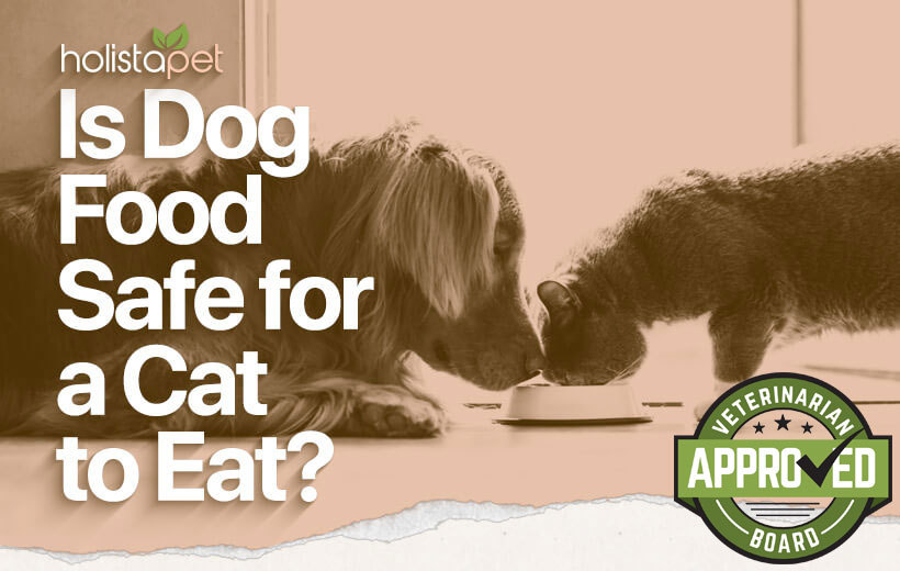 is dog food safe for a cat to eat featured image