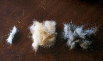 different cat hair loss features