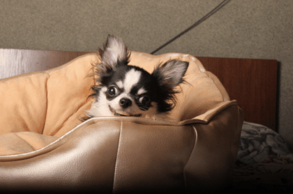 dog relaxing in their dog bed