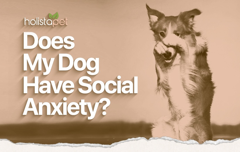dog social anxiety behavior blog featured image