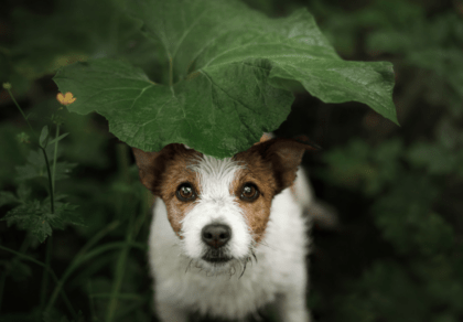 pup hiding under a leaf