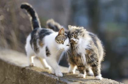 two kittens walking on a concrete ledge