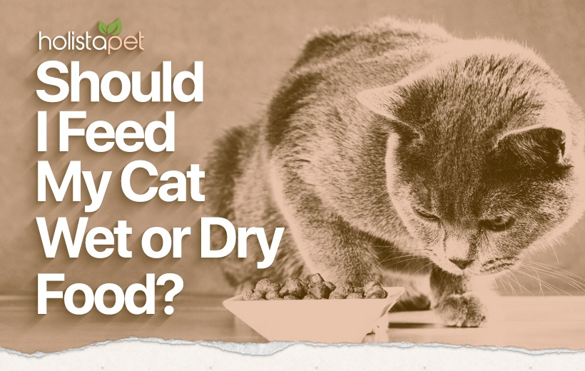 wet vs dry cat food featured image