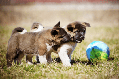 pups playing with a ball