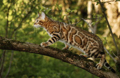 feline walking on a tree branch