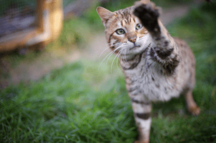 cat stretching its paw out