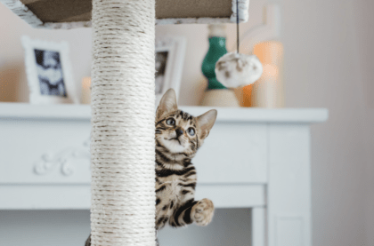 kitten playing on scratch post