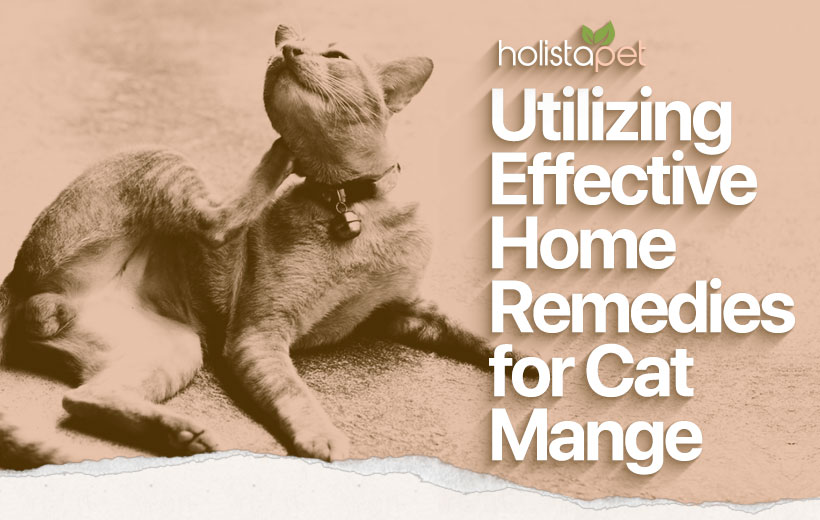 home remedies for mange in cats