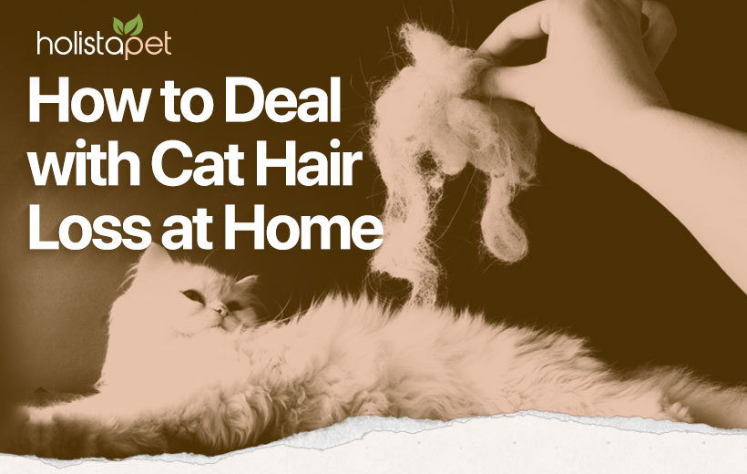 home treatment for cat hair loss featured blog image