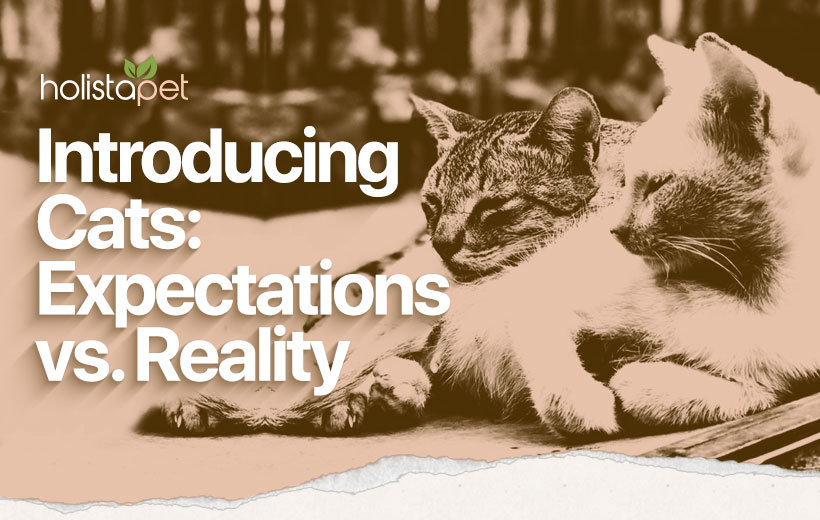 introducing cats featured blog image