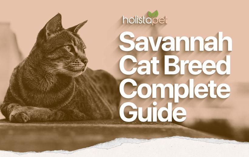 savannah cat breed featured blog image