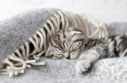 kitten sleeping on grey blanket