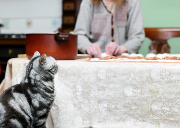 kitten peering up at table
