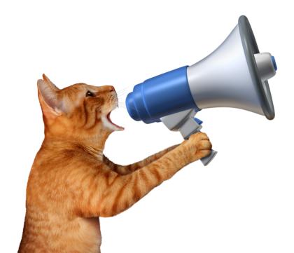 orange cat holding a megaphone
