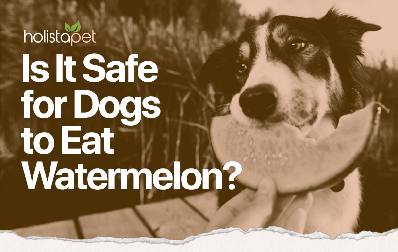 can dogs eat watermelon blog featured image