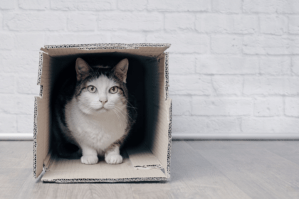 cat hiding in box to feel secure