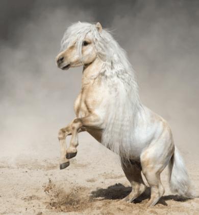 mini equine