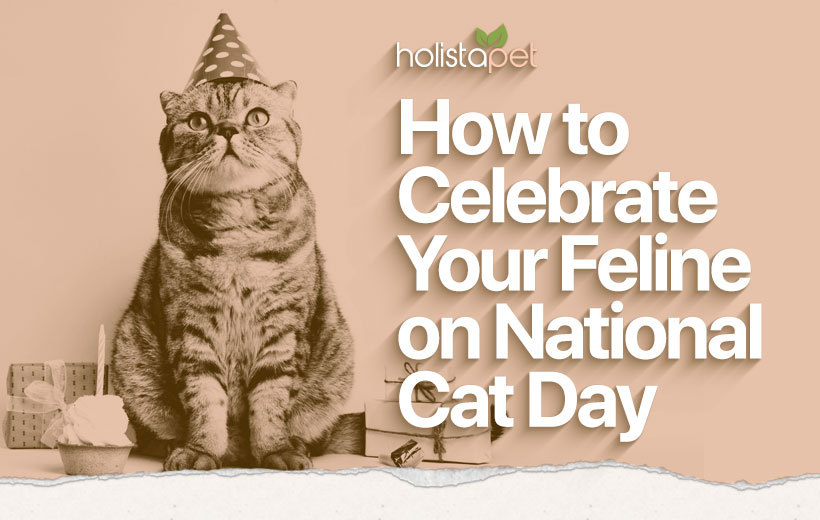 National Cat Day Celebrating Our Favorite Felines In 2020