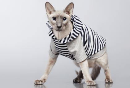 cat in a striped hoody sweater