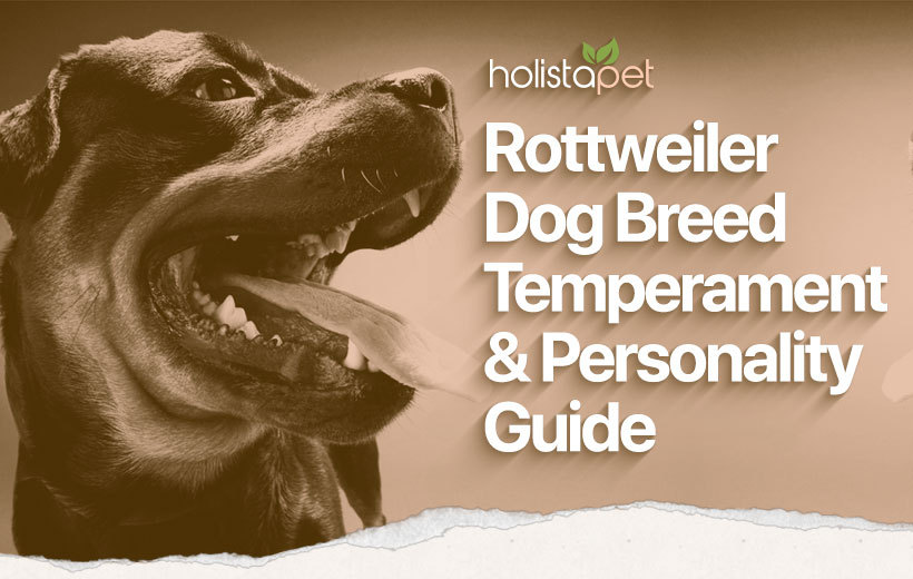 rottweiler dog breed blog featured image