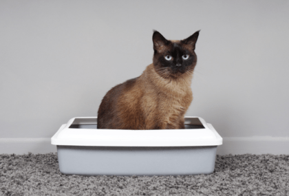 symptoms of cat diarrhea
