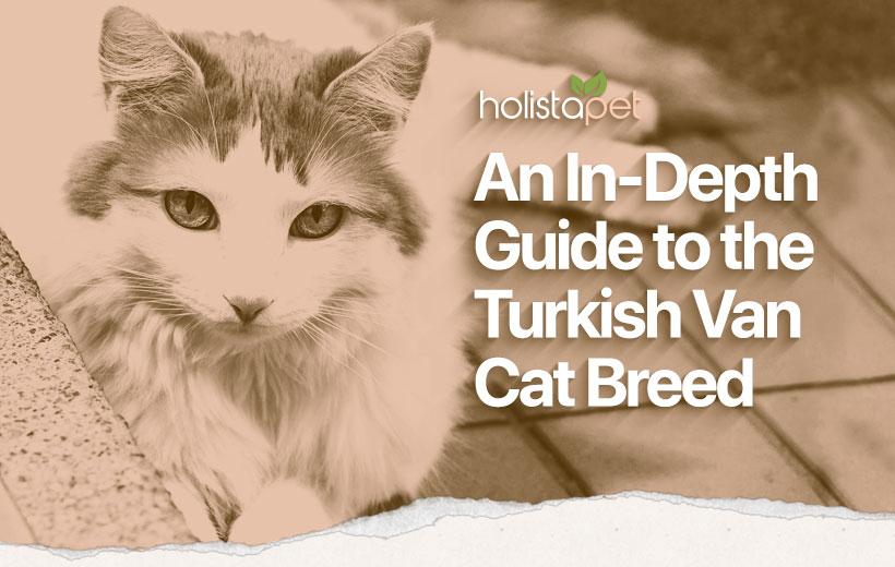 turkish van cat breed blog featured image