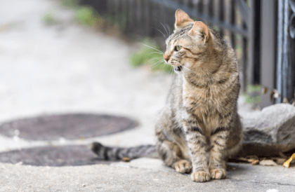 when to be concerned about a coughing cat