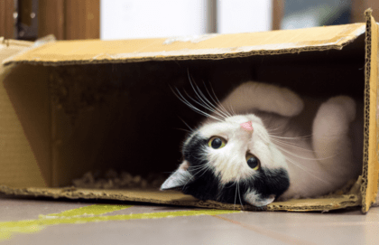 why do cats like boxes