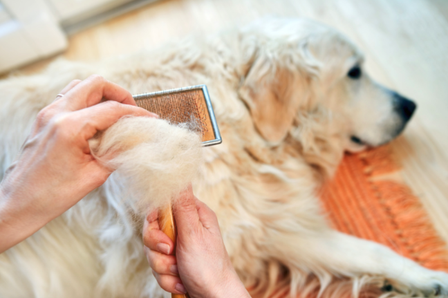 canine getting groomed
