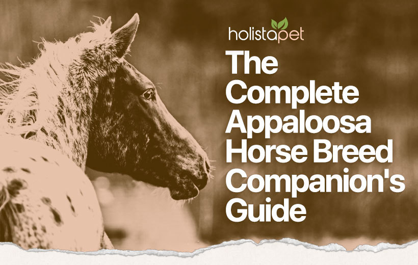 appaloosa horse breed featured image