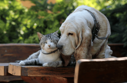 canine with cat on a wooden bench
