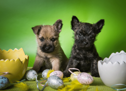 puppies on a table with easter eggs
