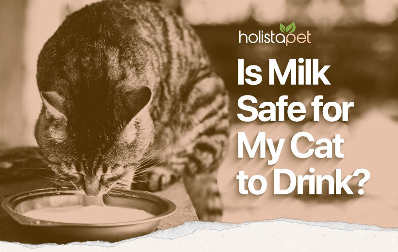 can cats drink milk featured blog image