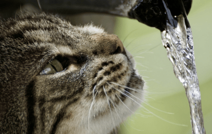 cat staring at water coming out from hose