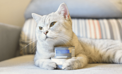white cat on couch holding onto cans of food