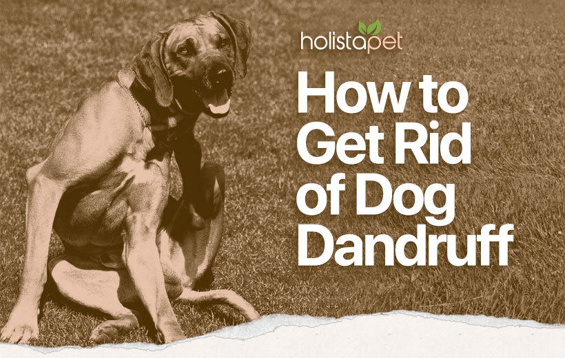 dog dandruff featured blog image