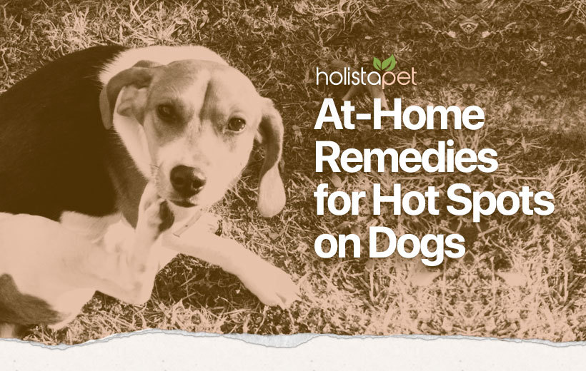 dog hot spot home remedy featured blog image