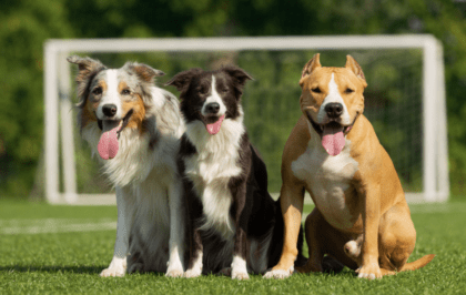 three dogs on a soccer field