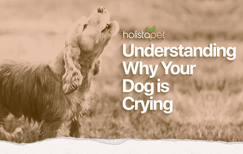 do dogs cry blog featured image