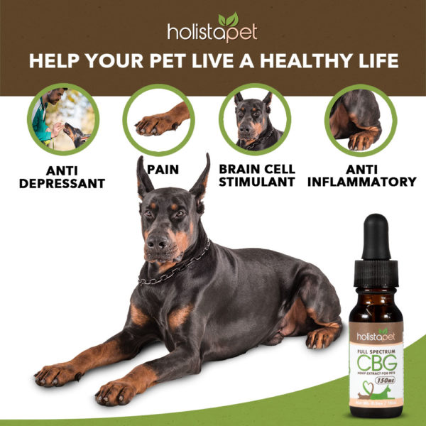 help your pet live a healthy life with cbg holistapet tinctures