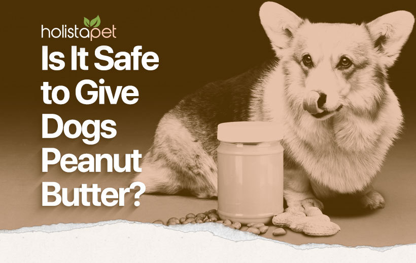 can dogs eat peanut butter featured blog image