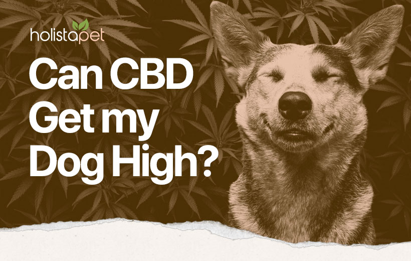 can dogs get high featured blog image