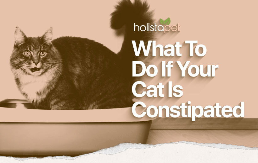 cat constipation featured blog image