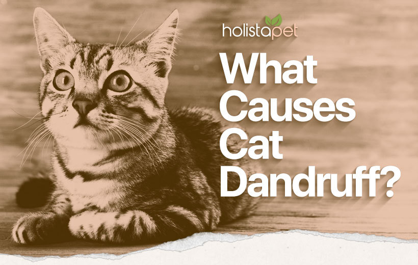 cat dandruff featured blog image