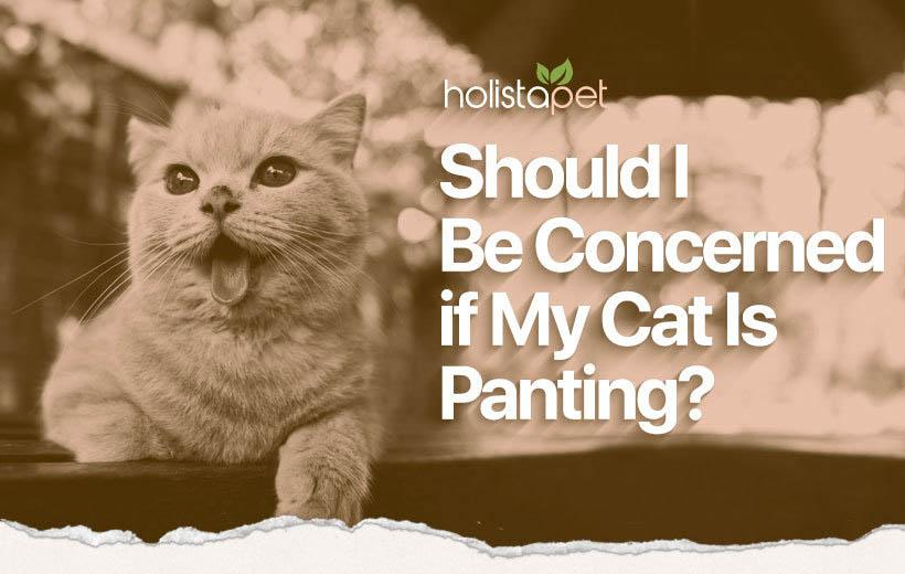 cat panting featured blog image