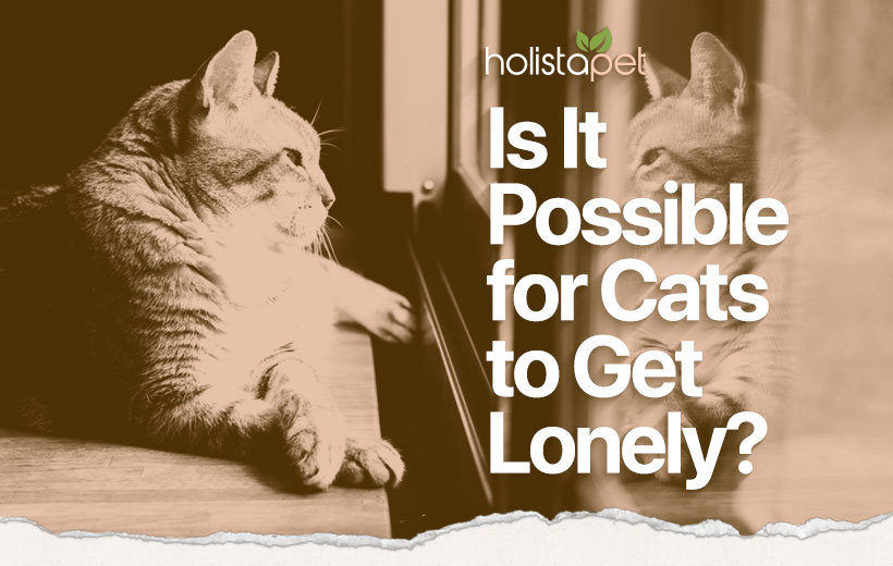do cats get lonely featured blog image