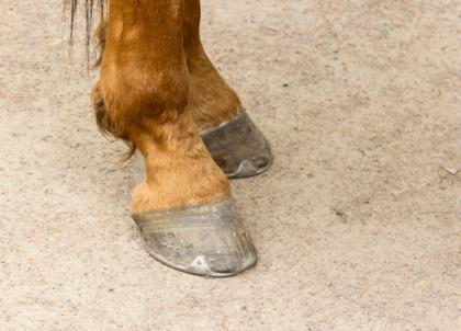 do horses need horseshoes?