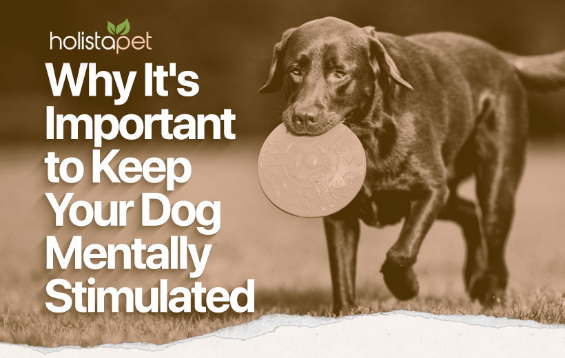 mental stimulation for dogs blog featured image