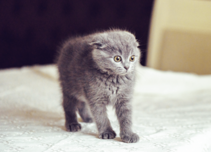 scared kitten on a bed
